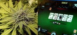 maconha e poker
