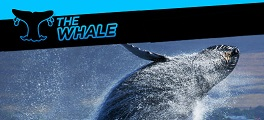 the whale promo 264